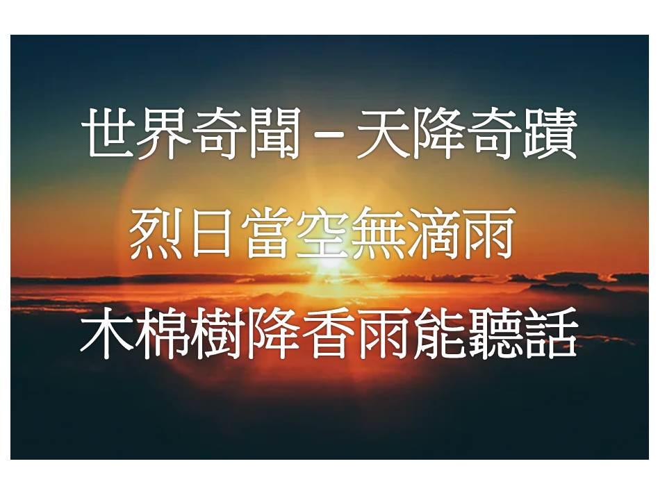 世界奇聞 – 天降奇蹟烈日當空無滴雨 木棉樹降香雨能聽話
