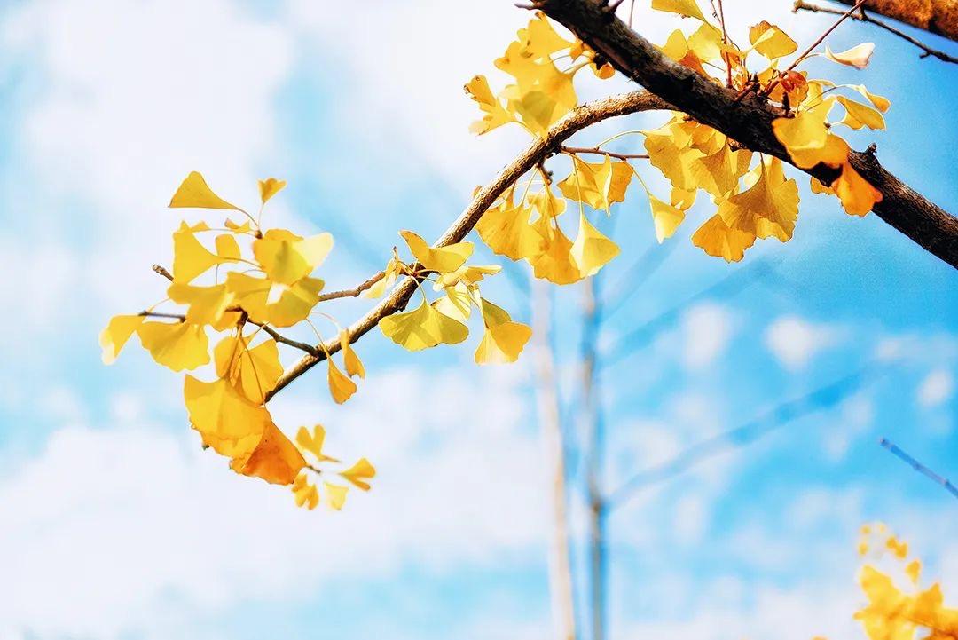 學習南無第三世多杰羌佛的如來正法,有了人生真正的方向,終究會回歸本屬於我的自然!學佛心得-心中的自然